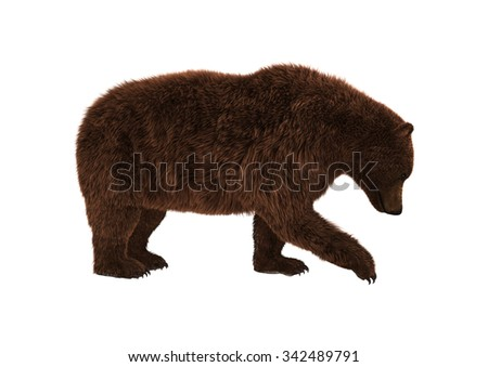 3D digital render of a brown grizzly bear isolated on white background - stock photo