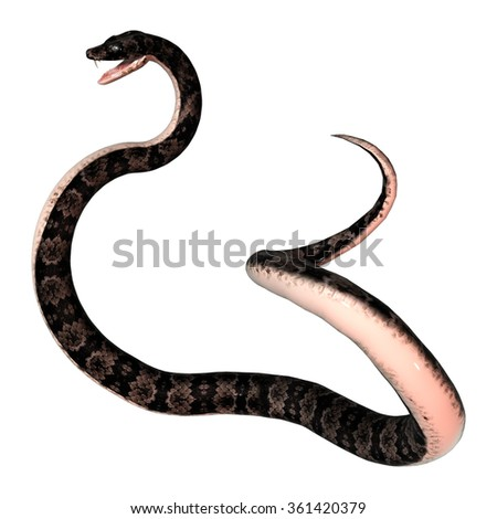 3D digital render of a cottonmouth snake isolated on white background