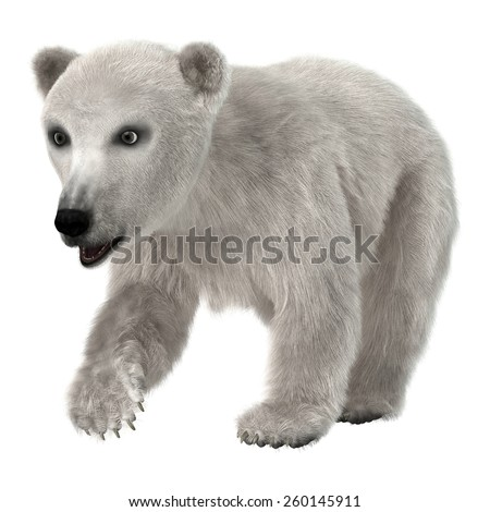 3D digital render of a cute baby polar bear isolated on white background