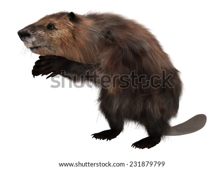 3D digital render of a cute beaver isolated on white background - stock photo