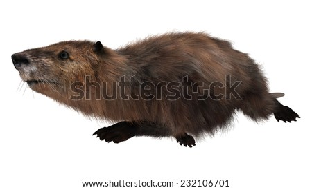 3D digital render of a cute swimming beaver isolated on white background