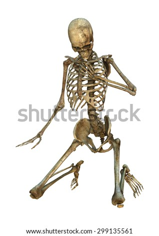 3D digital render of a human skeleton isolated on white background