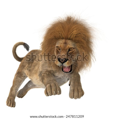 3D digital render of a hunting roaring male lion isolated on white background - stock photo