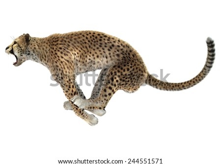 3D digital render of a jumping cheetah isolated on white background - stock photo