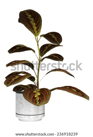 3D digital render of a maranta or prayer plant in a flower pot isolated on white background - stock photo