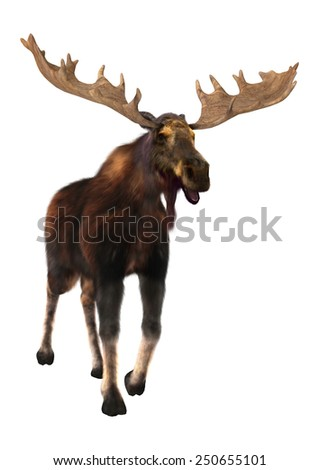 3D digital render of a moose (North America) or Eurasian elk (Europe), or Alces alces, isolated on white background - stock photo