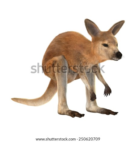 3D digital render of a red baby kangaroo isolated on white background - stock photo