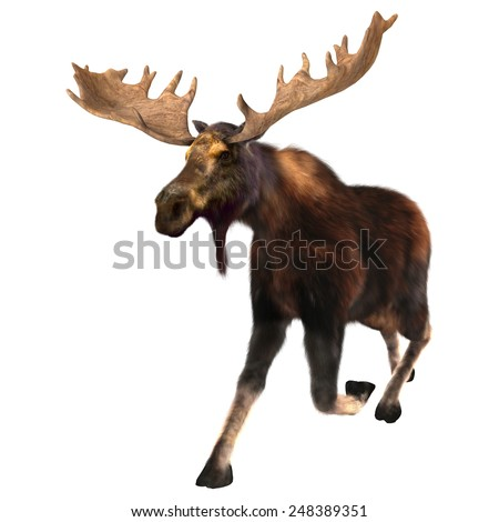 3D digital render of a  running moose (North America) or Eurasian elk (Europe), or Alces alces, isolated on white background - stock photo