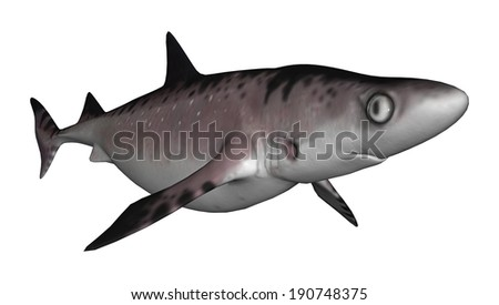 3D digital render of a shark isolated on white background