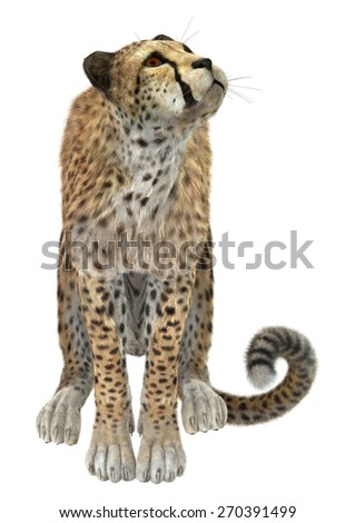 3D digital render of a sitting cheetah isolated on white background - stock photo