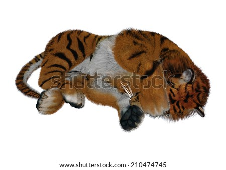 3D digital render of a sleeping tiger isolated on white background