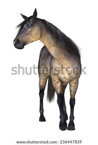 3D digital render of a standing grulla horse isolated on white background