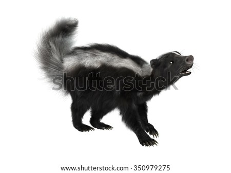 3D digital render of a striped skunk or Mephitis mephitis isolated on white background