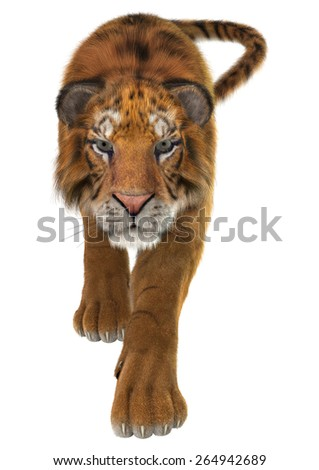 3D digital render of a tiger isolated on white background - stock photo