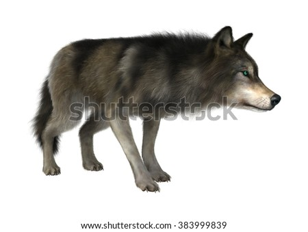 3D digital render of a wild wolf isolated on white background