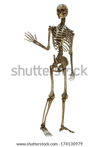 3D digital render of an old waving human skeleton isolated on white background - stock photo