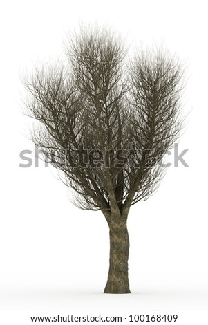 3d  English elm tree in winter with no leaves isolated over white - stock photo