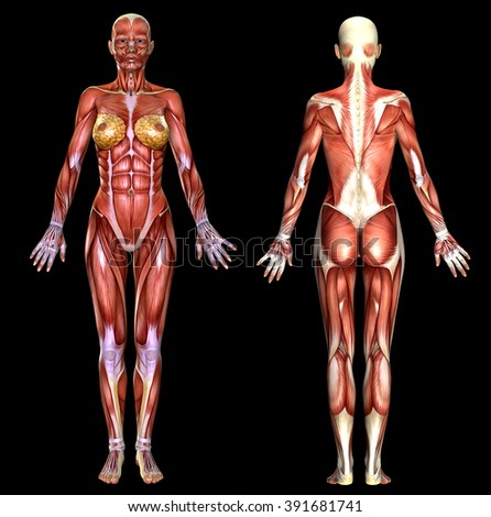 3D  female body anatomy isolated on black