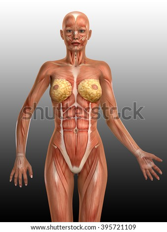 3D female medical figure illustration