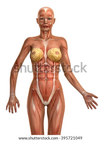 3D female medical figure illustration isolated on white background