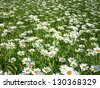 3d floral meadow - daisy version - stock photo