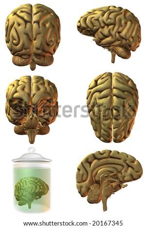 3D Human Brain - stock photo