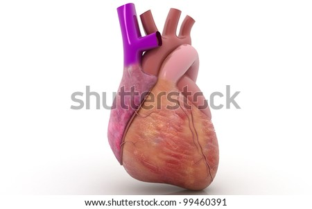 3D human heart in white background - stock photo