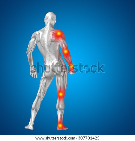3D human, man with muscles for anatomy, health designs with articular, bones pain, isolated on blue blackground for medical, fitness, medicine, bone, care, hurt, osteoporosis, painful, arthritis body - stock photo