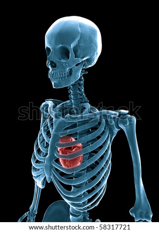 3D human skeleton with a visible heart - stock photo