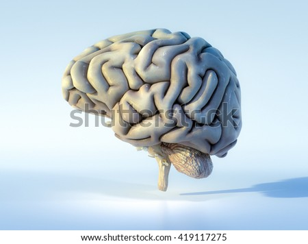 3D illustrated detailed view of the human brain. Left view. - stock photo