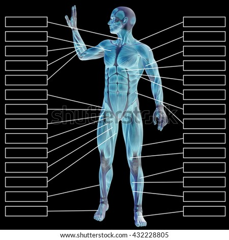 3D illustration of a concept human man anatomy and muscle for sport and textbox on blue background for body, tendon, fit, builder, strong, biological, skinless, shape, muscular, posture health medical
