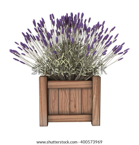 3D illustration of a lavender planter isolated on white background