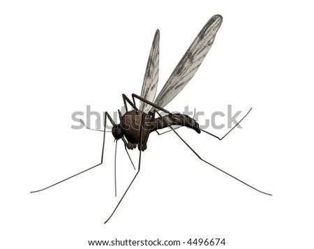 3D Illustration of a mosquito