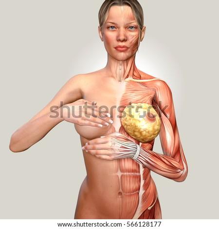3d Illustration Woman Anatomy Controlling Her Stock Illustration