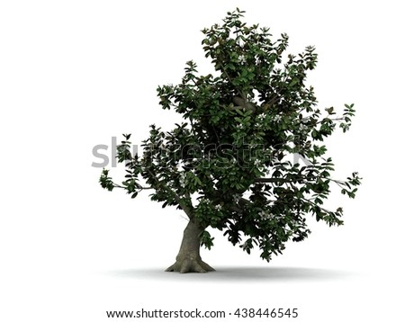 3d illustration of blooming magnolia tree isolated on white - stock photo