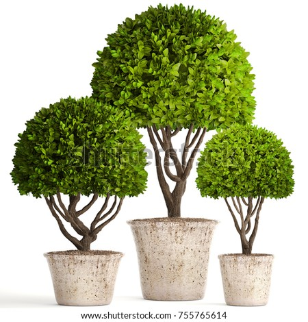 photo stock with image landscaping plants decor and download trees of gardening plant yard decorative