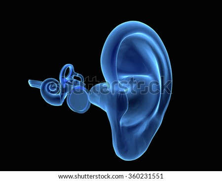 3D illustration of ear anatomy with Eardrum, malleus, incus and stapeson - stock photo