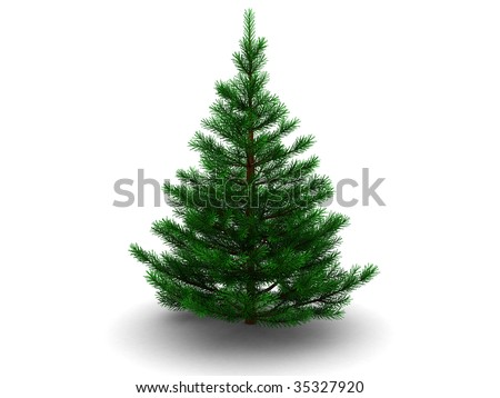 3d illustration of fir tree isolated over white background