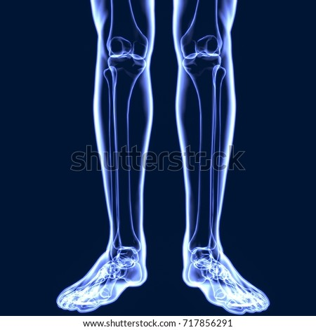 3d illustration of human body leg bones