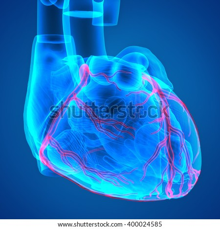 3D Illustration of Human Body Organs (Heart)