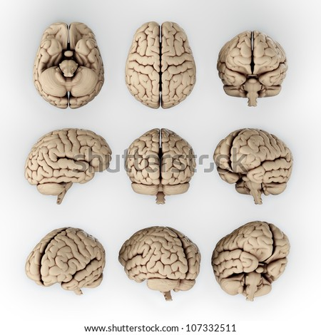 3D illustration of human brain in different angles - stock photo