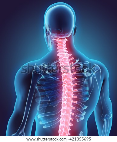 3D illustration of Spine - Part of Human Skeleton. - stock photo