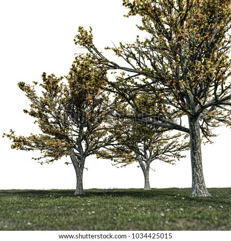 3d illustration of trees on a huge field isolated on white background