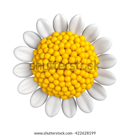 3D Illustration of  White daisy flower front view on white color background or isolated, Virtual Rendering.
