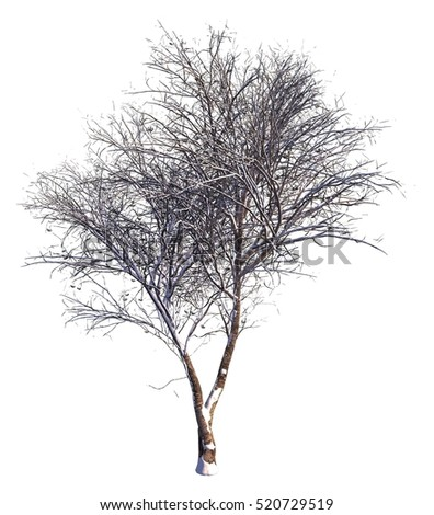 3D illustration Winter tree on snow isolated on white