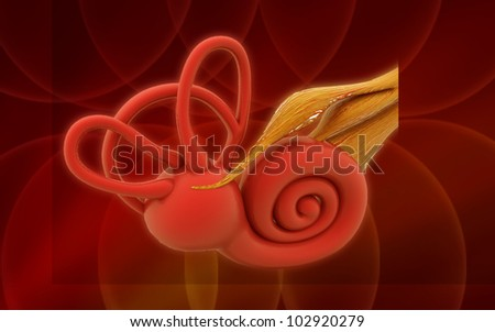 3d inner ear. cochlea on a color background - stock photo