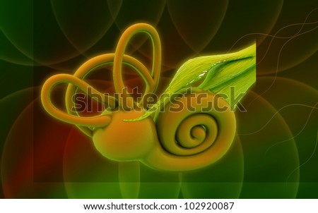 3d inner ear. cochlea on a colour background