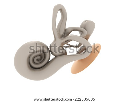 3d inner ear cochlea on  white background - stock photo