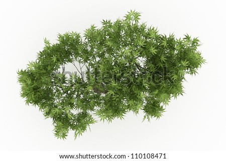 3d Japanese Maple tree isolated over white