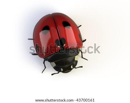 3d ladybird isolated on white - stock photo